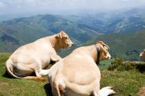 Pyrenee mountains